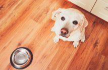 cheap dog food online