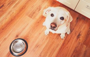 cheap dog food online