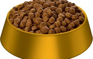Dog Food Pic