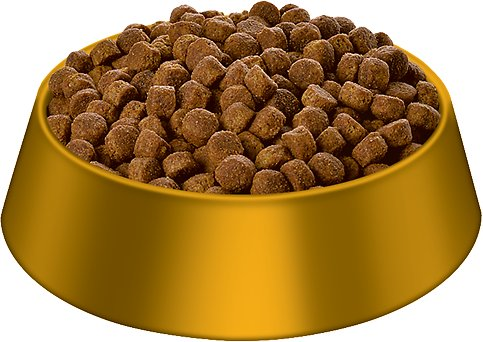Dog Food Pic
