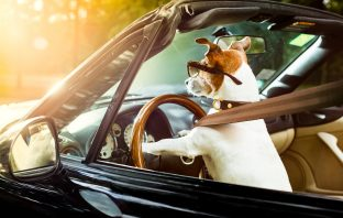 Why It's Important for Pets to Buckle Up
